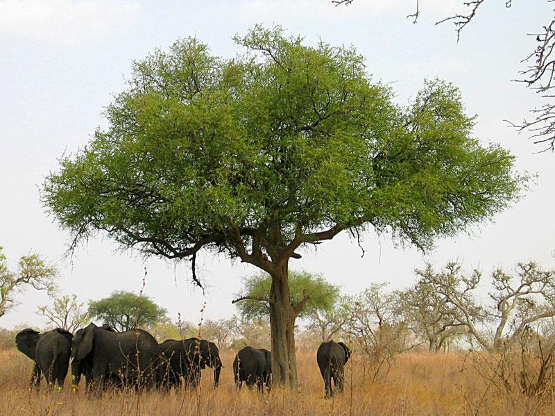Интересные факты о Камеруне